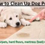 How to Clean Up Dog Pee (Complete Guide)